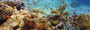 Healthy-Beautiful-Coral-Reef-