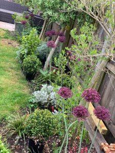 gardening - Helping me during the stress awareness month