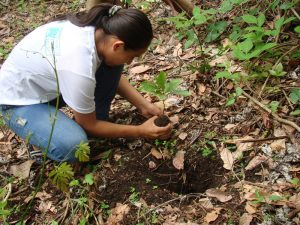 tree-planting-world-land-trust