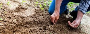 man-planting-plant