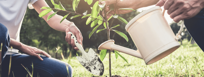 World Environment Day 2021 Plant Image