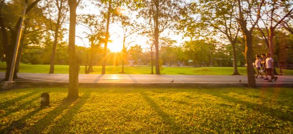 summer-sunshine-in-park