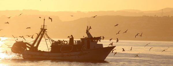Protect our oceans with sustainable seafood