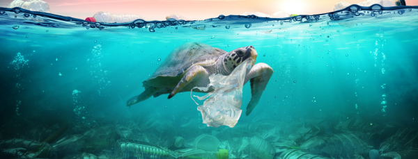 Plastic Free Bag Day