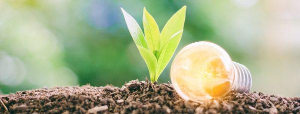 green-living-lightbulb-energy-saving-tips